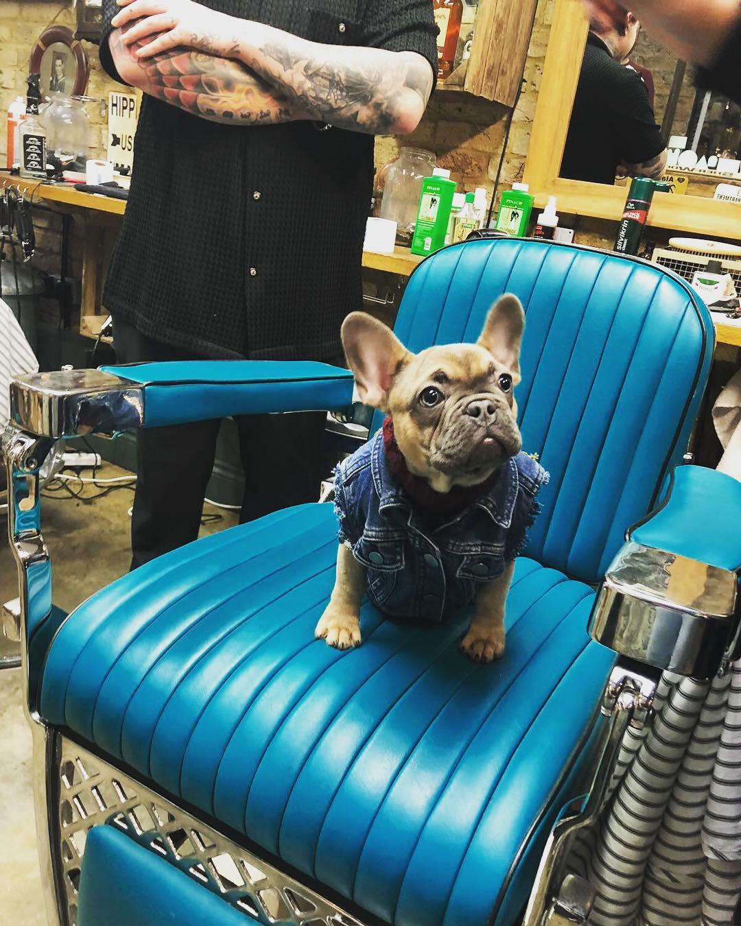 frenchie-puppy