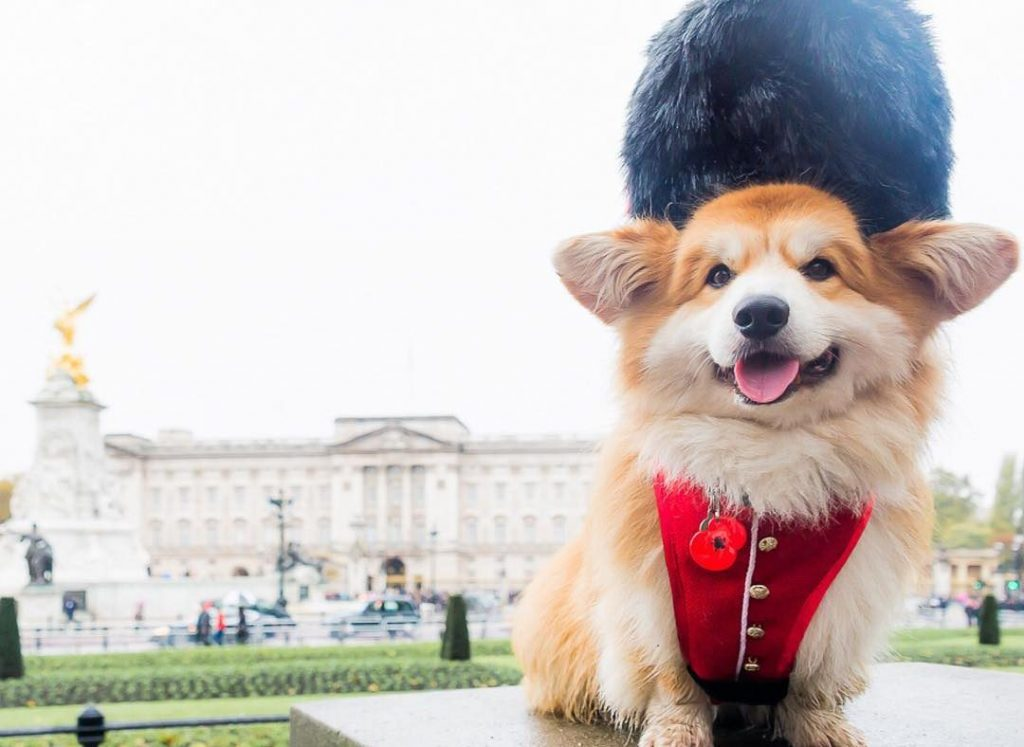 15 London Dogs You Should Definitely Be Following On Instagram