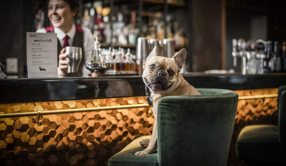 Bottoms Pup! A Cocktail Bar Especially For Dogs Is Coming To London