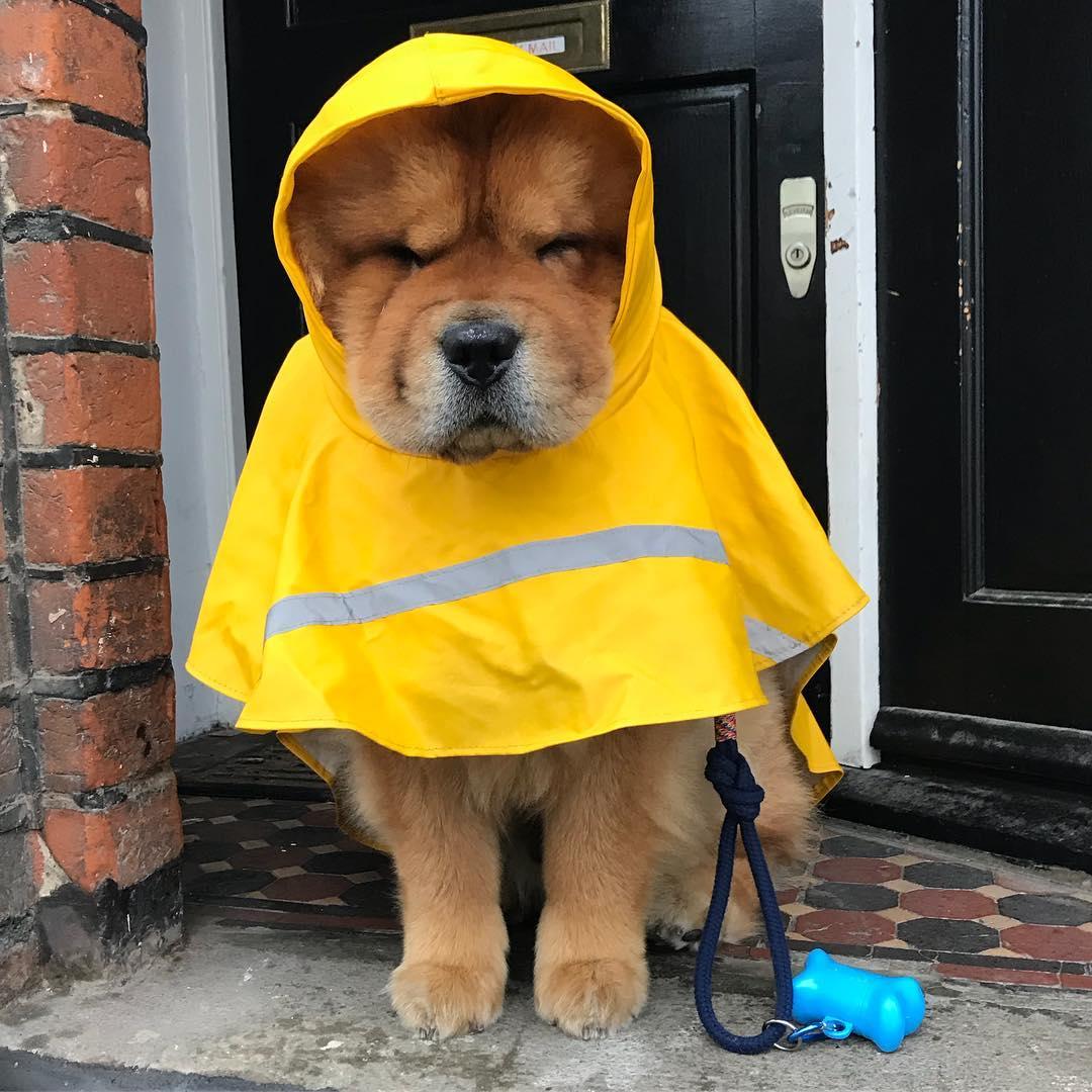 kevin-rain-dog