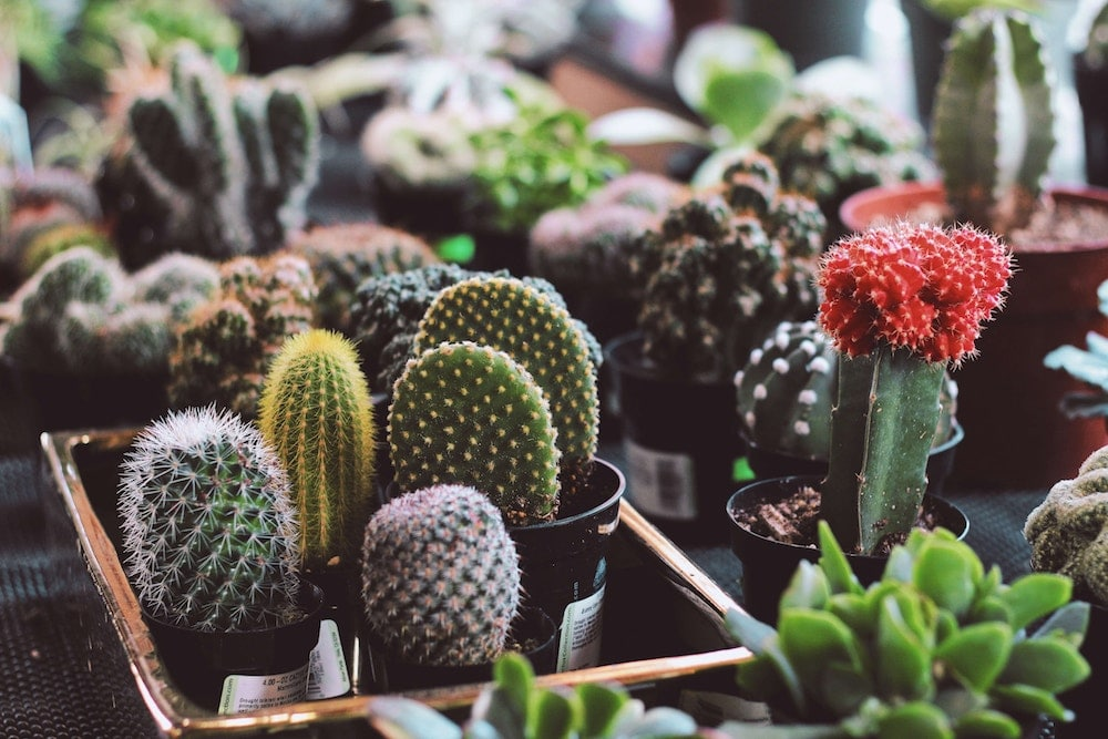 There's A Brand New Botanical Market For South Londoners This Weekend
