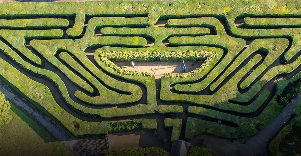 Hampton Court Maze summer