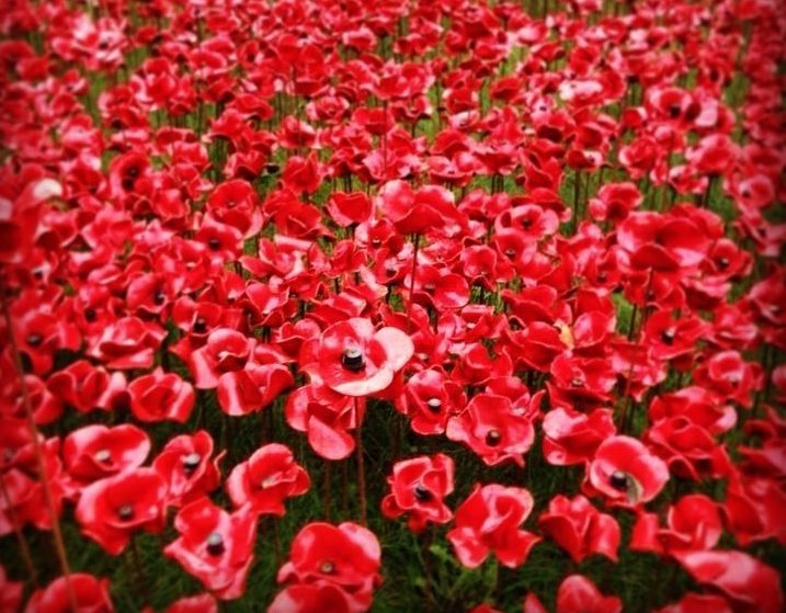 The Tower Of London's Breathtaking Poppies Will Return This Year
