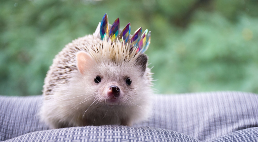 There's A Festival Dedicated To Hedgehogs Coming To East London