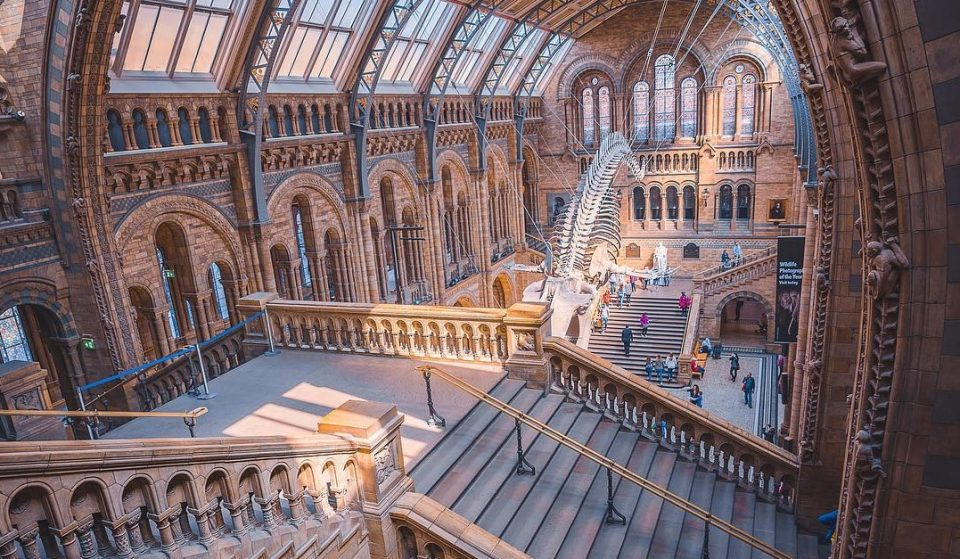 The Natural History Museum Is Hosting Halloween Film Nights This Month