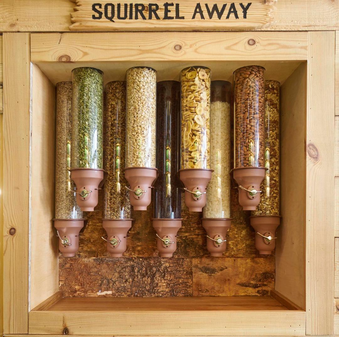 squirrel-nuts