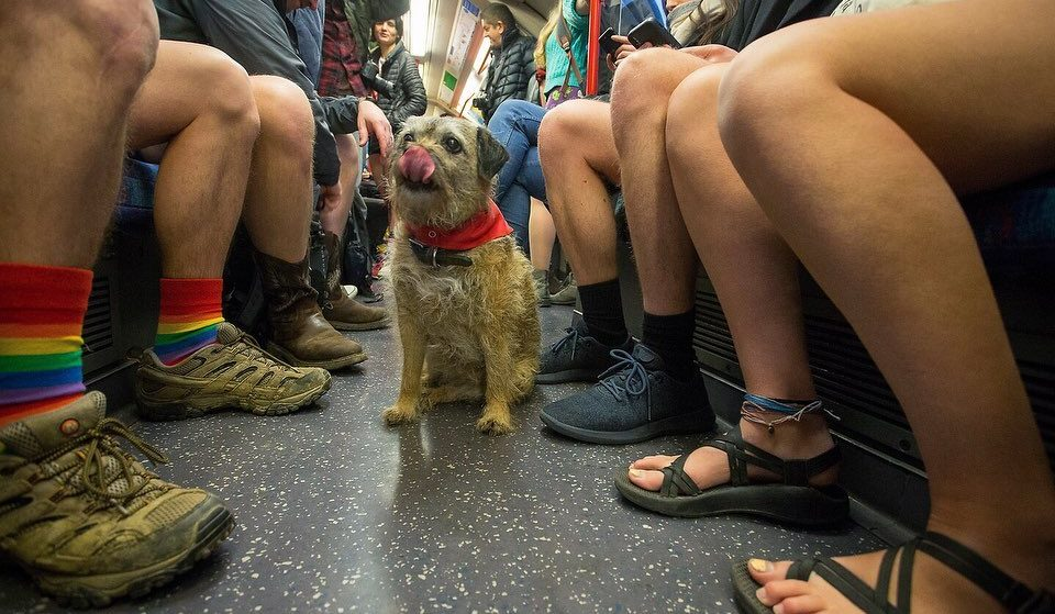 In Pictures: Hundreds Of Londoners Rode The Tube Without Their Trousers Today