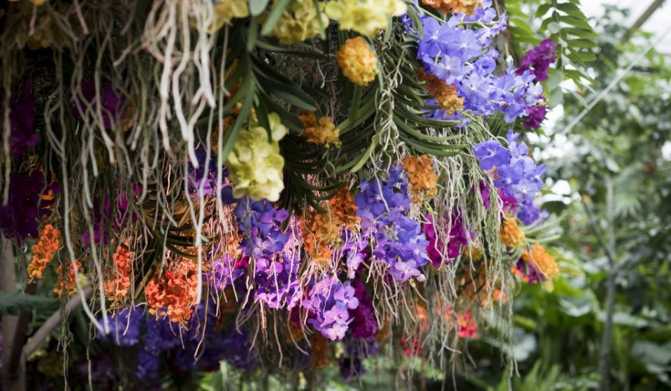 Kew Gardens' Stunning Orchid Festival Is Back In Town