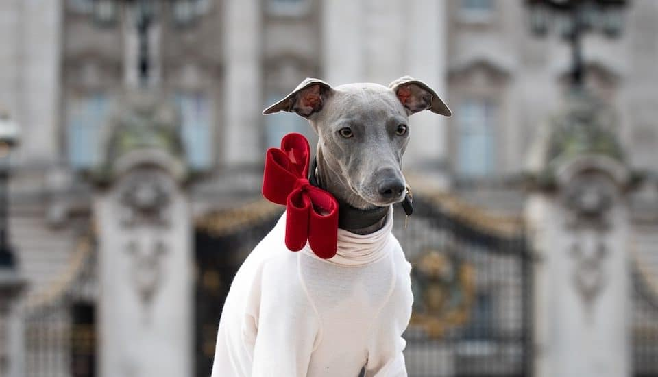 The First Ever London Dog Week Is Happening Next Week