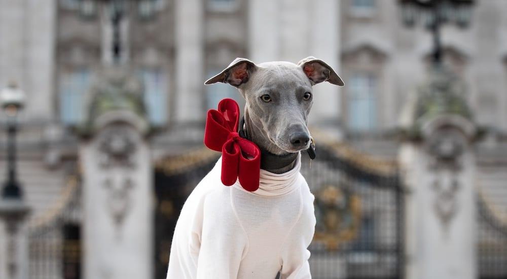 London Dog Week. Dog outside Buckingham Palace.