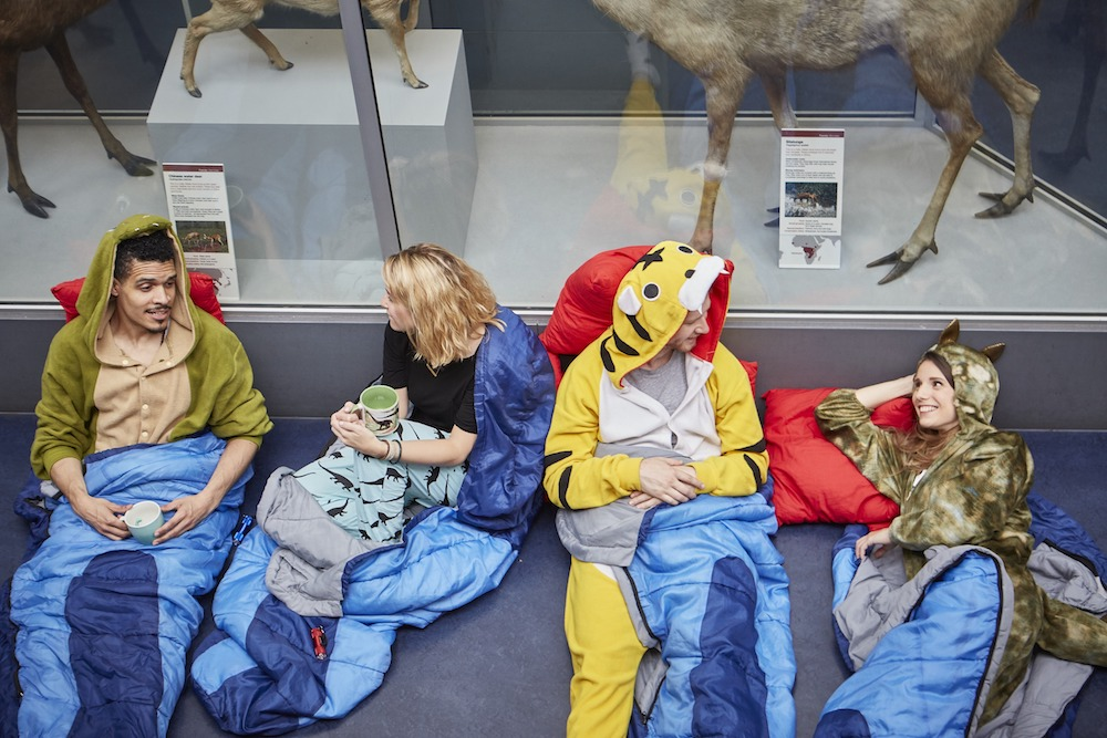 Dino snores for grown ups marketing