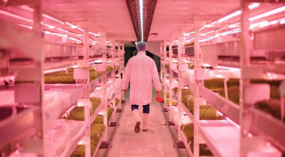 Growing Underground Farm