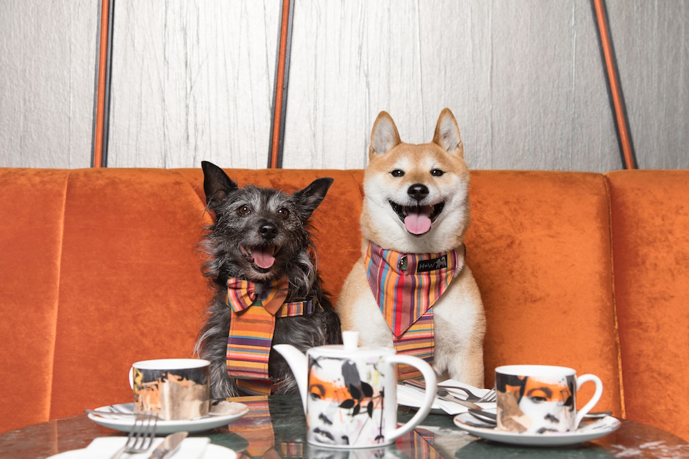This Rooftop Brunch Is The Pawfect Activity For You And Your Pooch