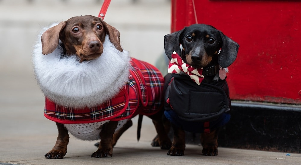 This Restaurant Is Hosting A Doggy Brunch And Fashion Show For London Dog Week