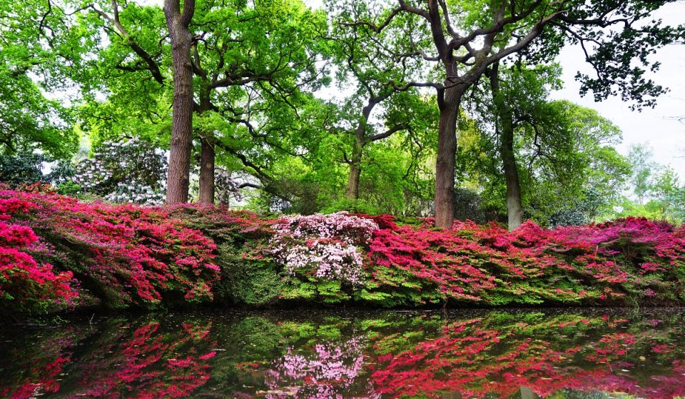 This Hidden London Garden Is Pretty In Pink Right Now • Isabella Plantation