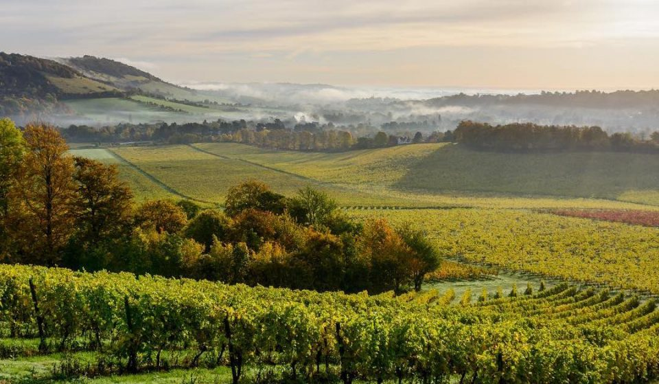 A New Wine Region Has Launched Just Outside Of London – And You Can Visit