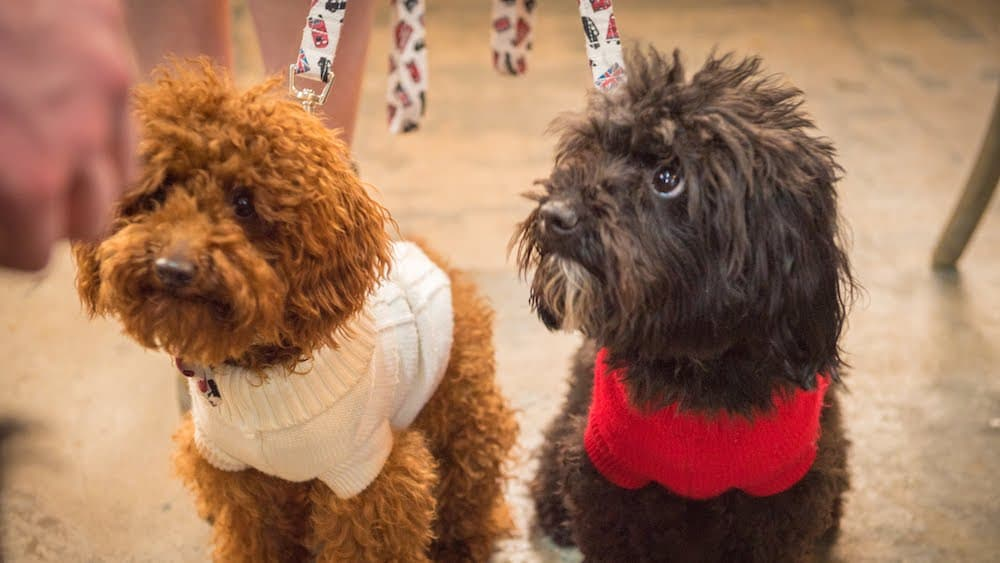 Go Bowling With Your Pooch At This Dog-Friendly London Alley