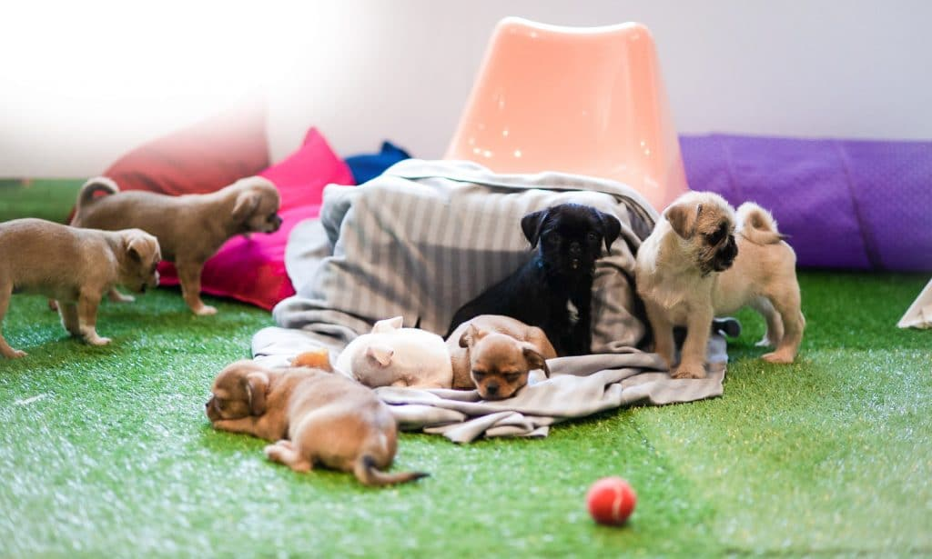 These Guys Will Bring Puppies To Your Office For Lots Of Cuddles