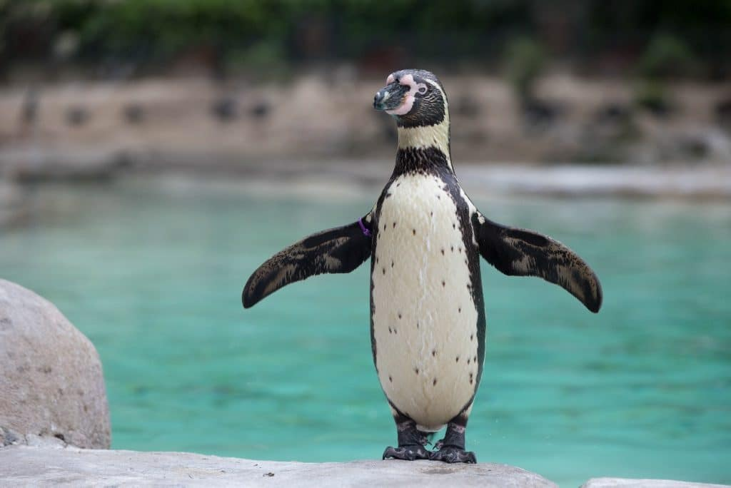 Watch The Sun Go Down With The Animals At ZSL's Adults-Only Zoo Nights