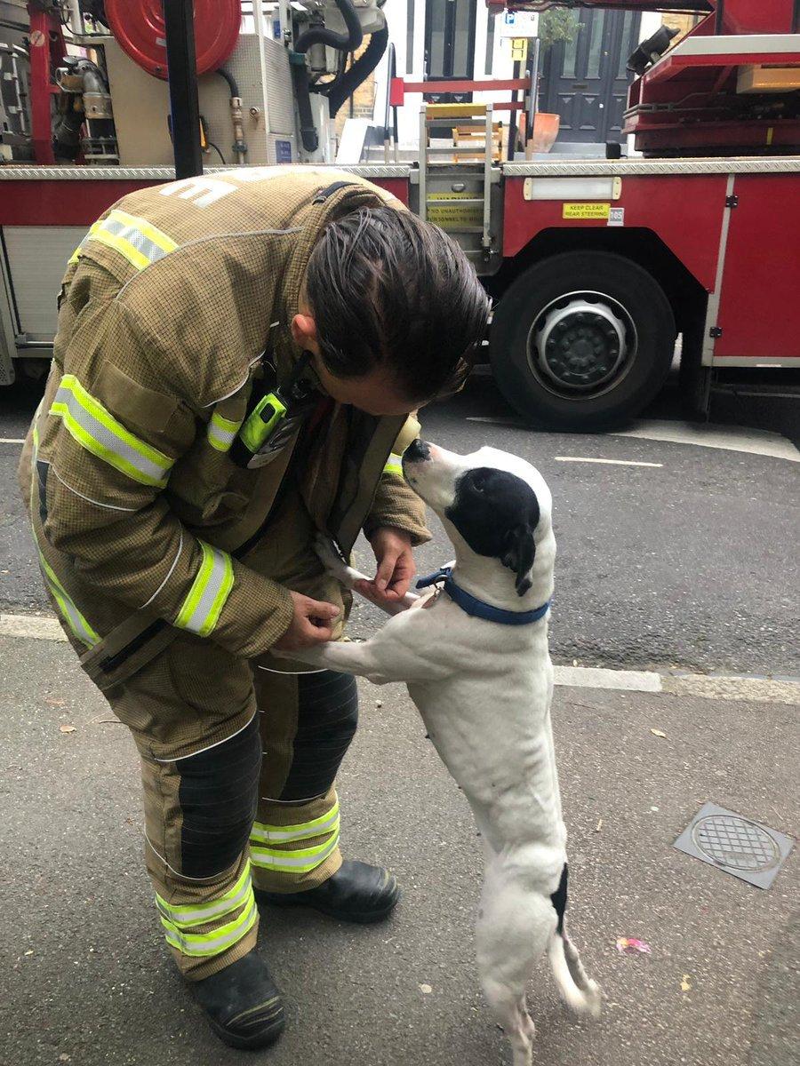 Dog grateful rescue fire brigade
