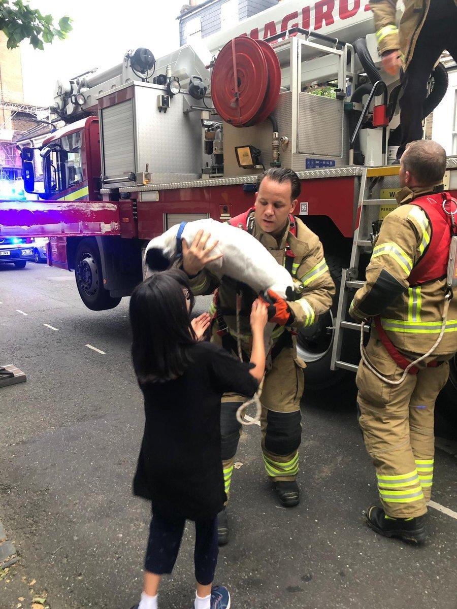 Dog rescue return owner