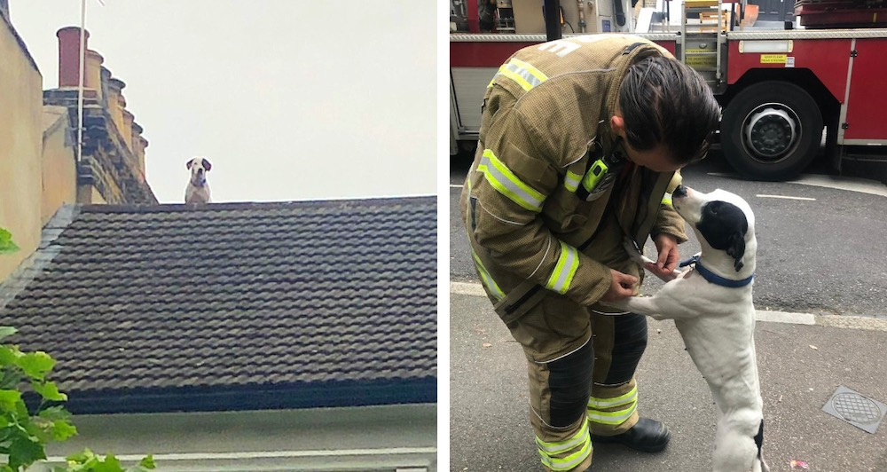 Dog rescued roof London