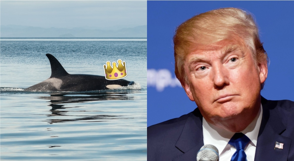 Donald Trump Called Prince Charles 'The Prince Of Whales' And Twitter Is In Hysterics