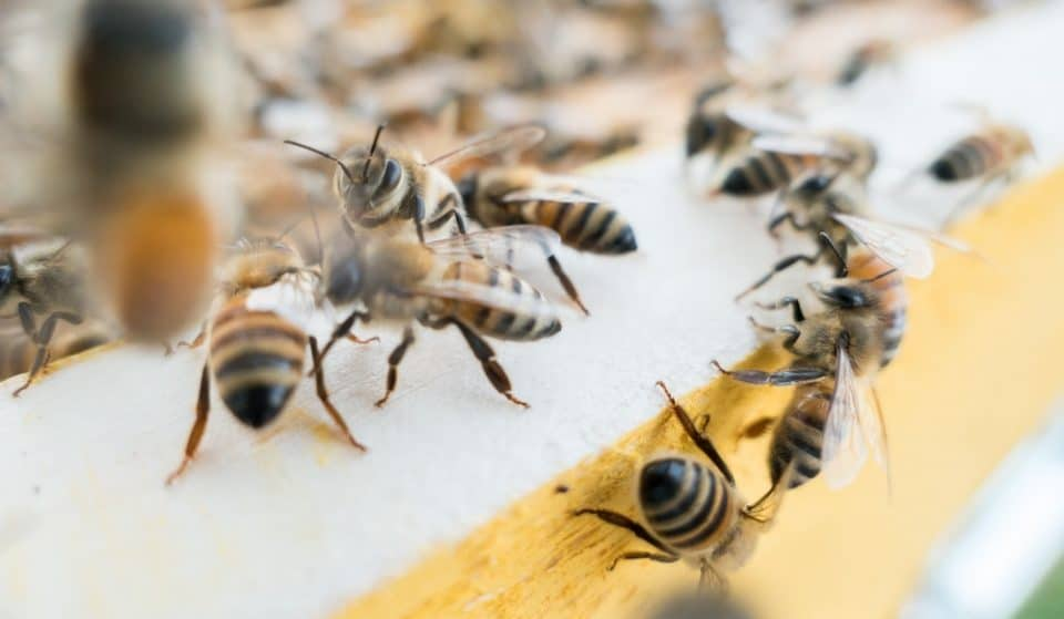This London Hotel Is Home To 120,000 Resident Bees – And Their Honey Is Used To Make Cocktails