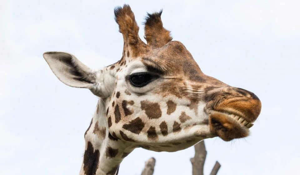 Your Step-By-Step Guide To Experiencing Everything At Zoo Nights