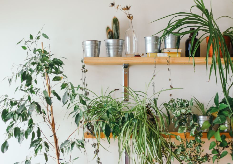 A Festival Dedicated To Houseplants Is Coming To London