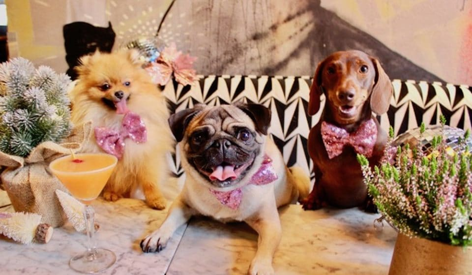 A Dachshund, Pug And Pomeranian Party Is Coming To London