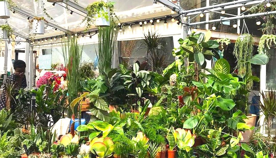 Two Charming Houseplant Markets Arrive In London This Saturday
