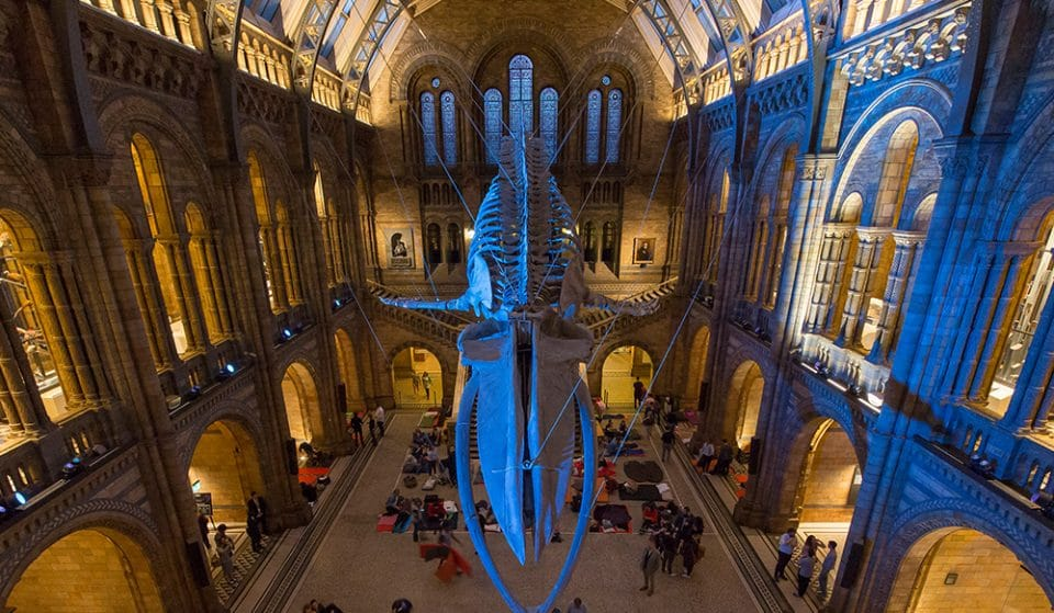 The Natural History Museum Is Hosting An Adults-Only Sleepover This Spring