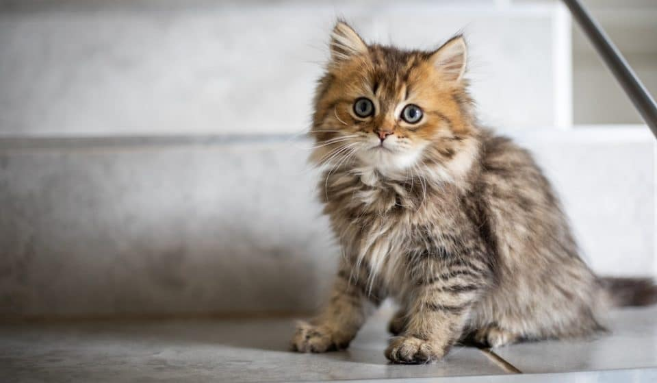 This 'Cat Extravaganza' Is Perfect For Cat-Loving Londoners