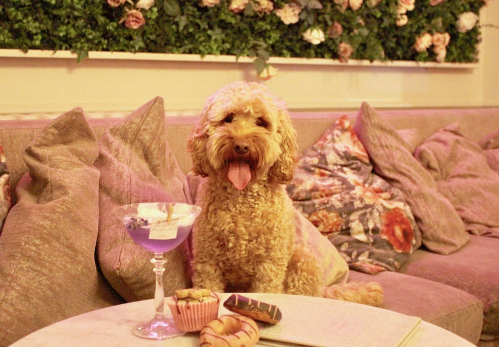 A Pop-Up Cockapoo Café Is Coming To London Next Month