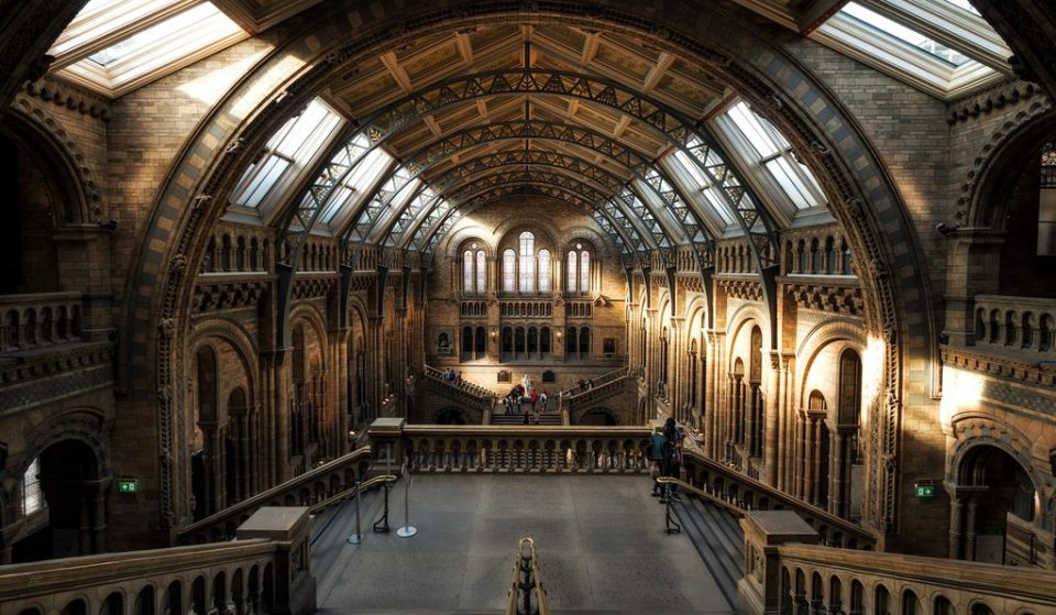 A Fantastic Beasts-Inspired Exhibition Is Coming To The Natural History Museum