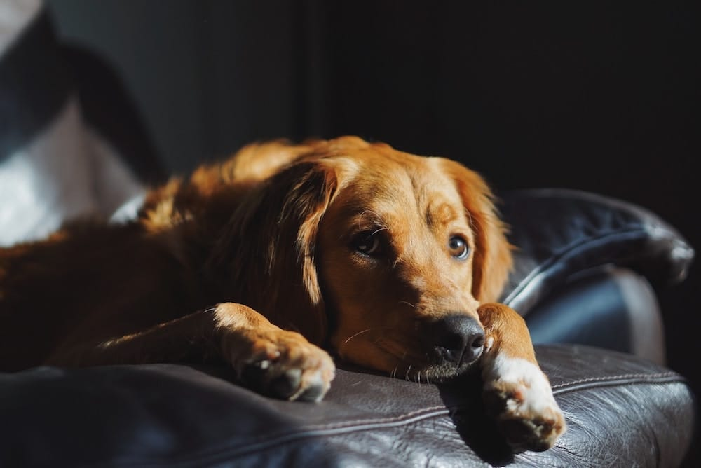 Renters Could Soon Be Allowed Pets, According To New Tenancy Rules
