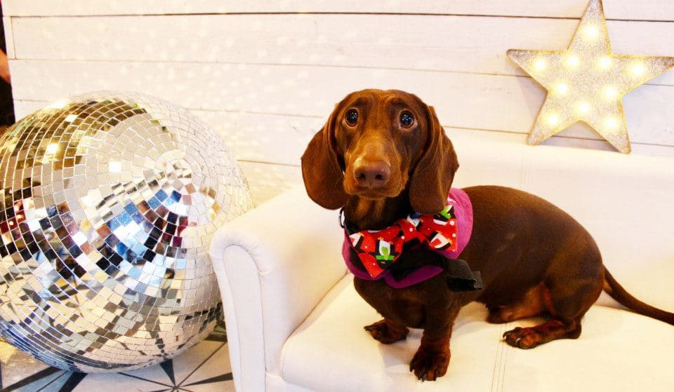 An Adorable Dachshund Disco Arrives In London Next Month