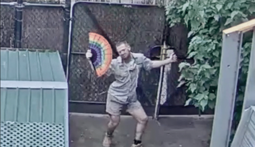 A Melbourne Zookeeper Was Caught Dancing On A Live Cam, And He's Totally Won Our Hearts