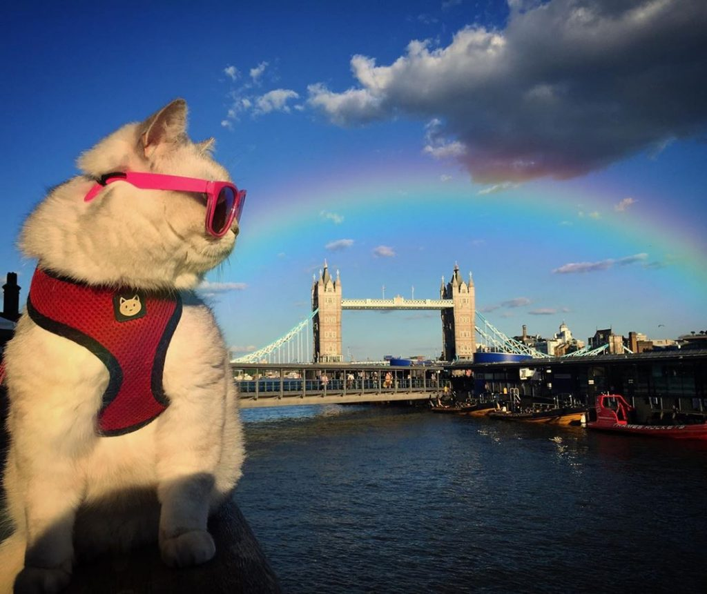 This Adventure Puss Has Her Very Own Instagram Account — And She's An Absolute Boss, TBH