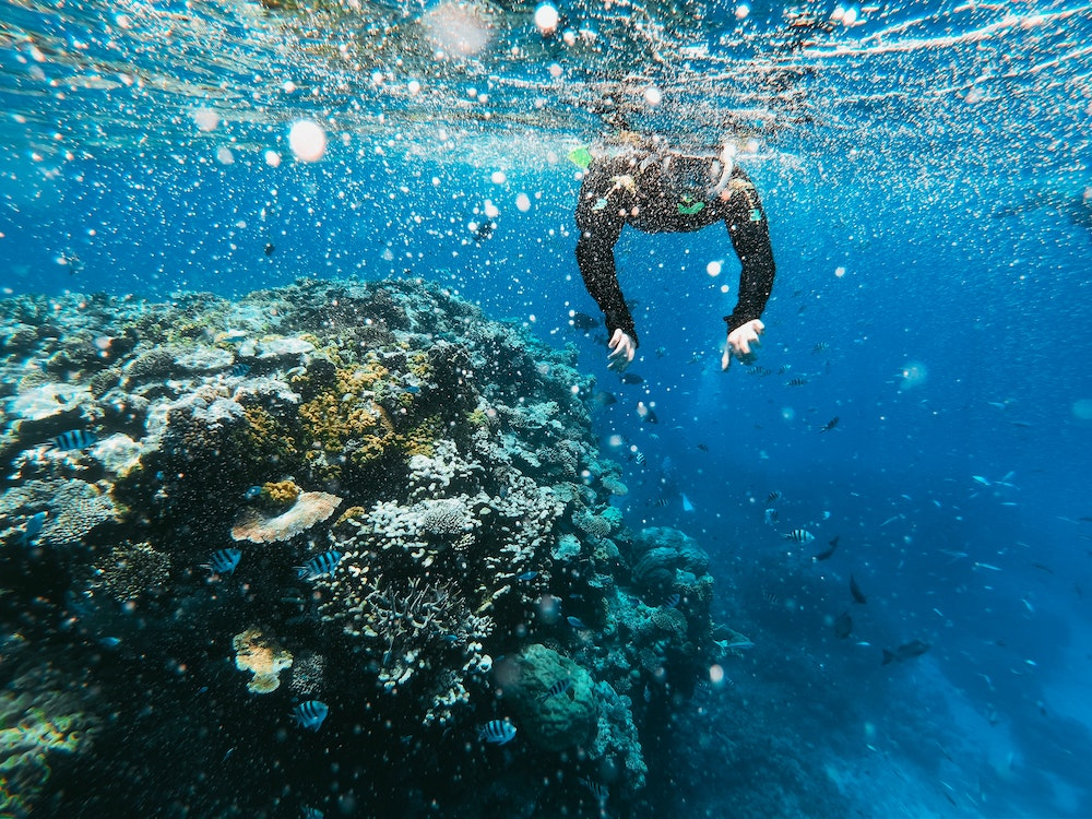 Scuba Divers Are Volunteering To Plant Coral Along The Great Barrier Reef
