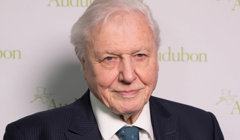 Sir David Attenborough Has Received The Covid-19 Vaccine