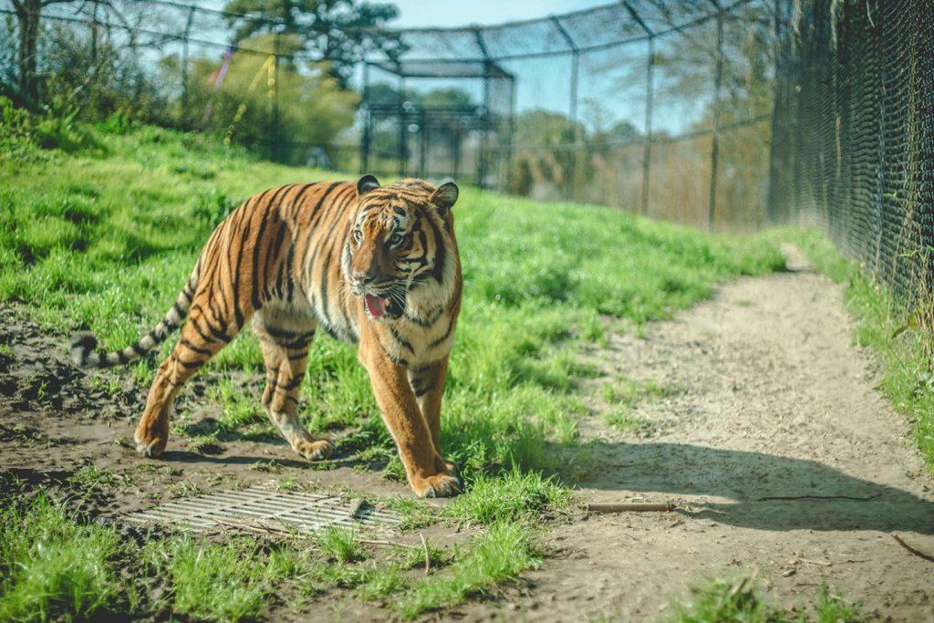 Tiger King quiz