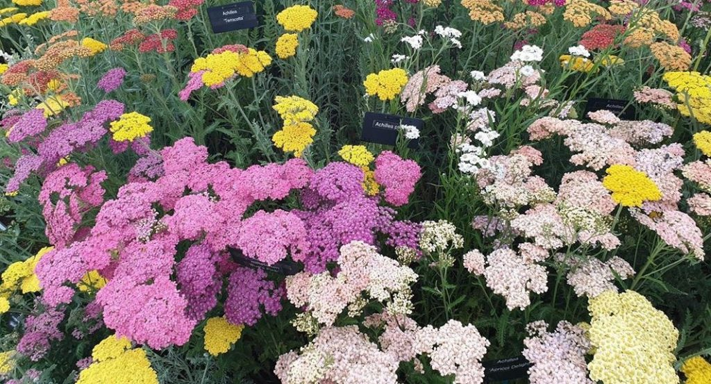 Plants From The Cancelled Chelsea Flower Show Are Now Available To Order Online