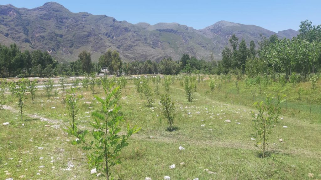 Pakistan Government Hires Unemployed Workers To Help Plant Ten Billion Trees