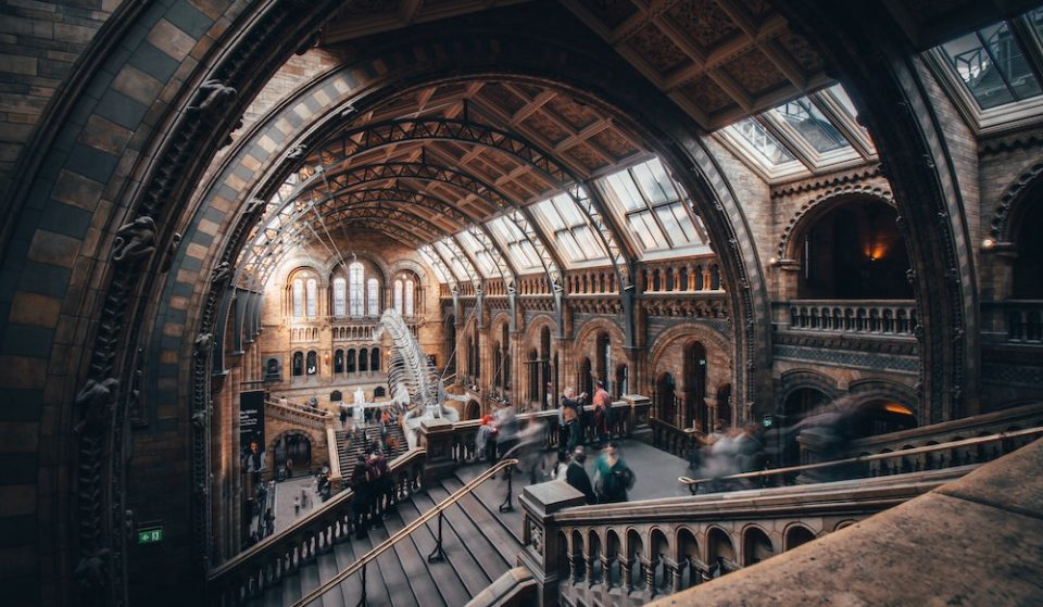 The Natural History Museum Is Set To Reopen Next Month