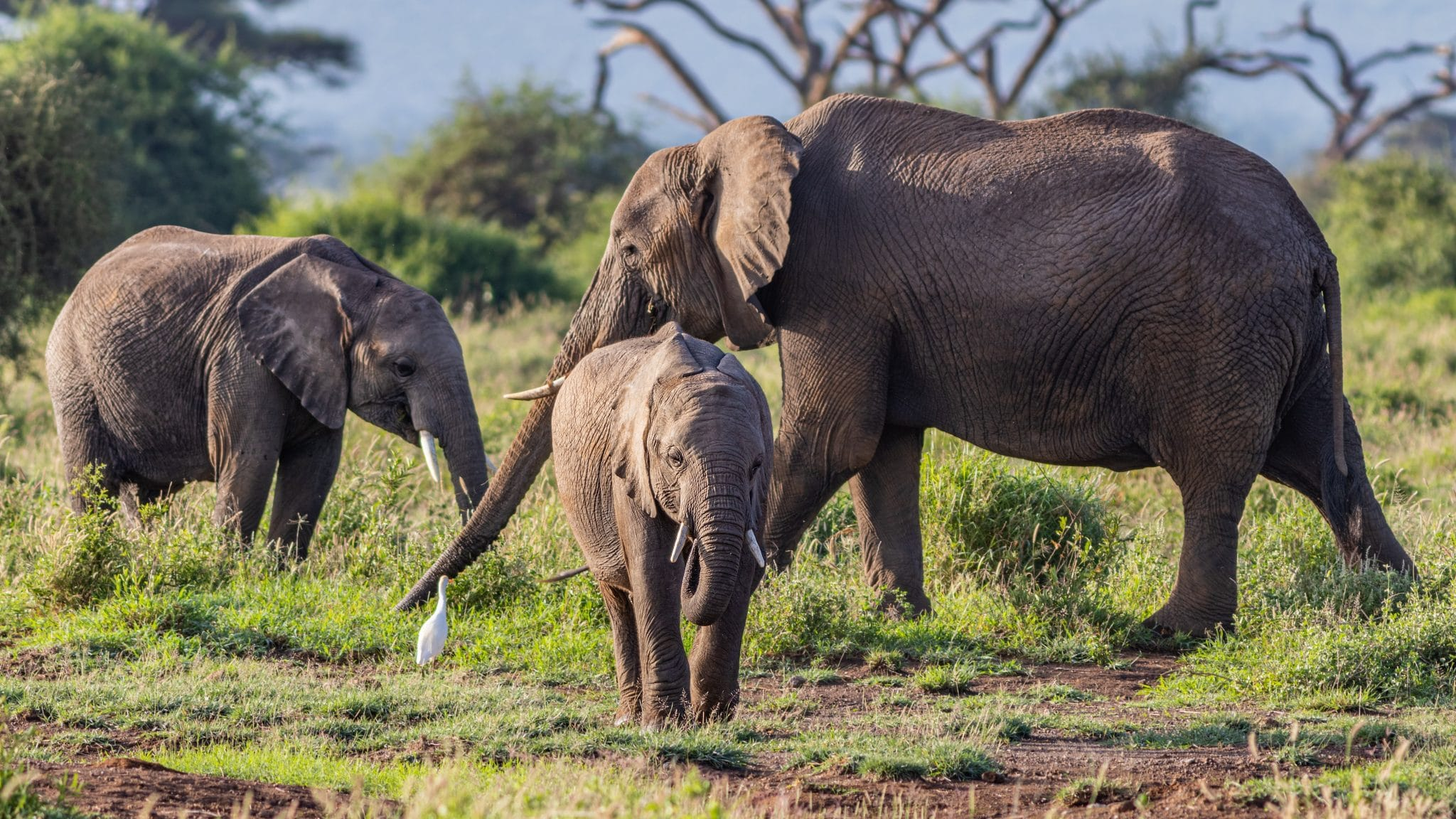 Elephants Population