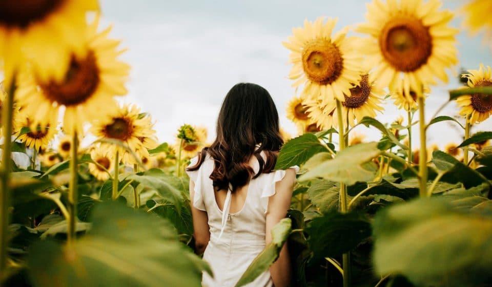 5 Sensational Sunflower Fields To Visit Near London