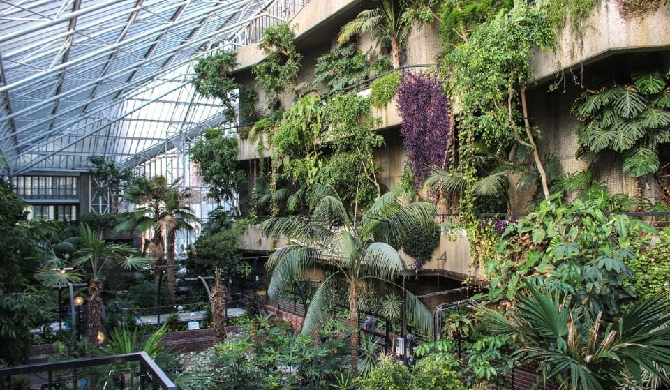 London's Beautiful Indoor Rainforest Is A Verdant Paradise • Barbican Conservatory