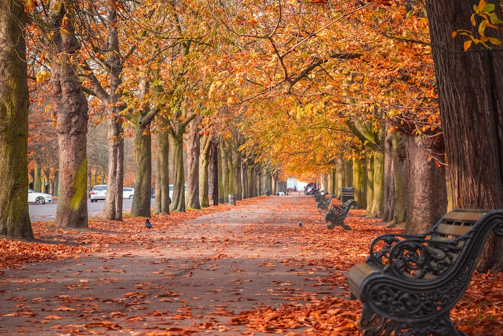 17 Cosy And Romantic Autumn Date Ideas In London